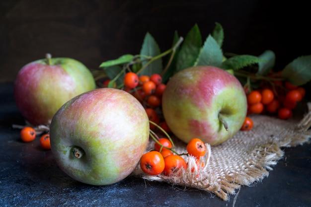 Äpfel und ebereschenbeeren auf einem schwarzen hintergrund. herbststillleben.