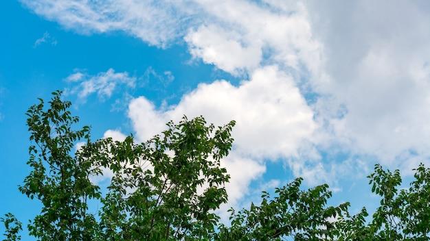Äste gegen den blauen himmel