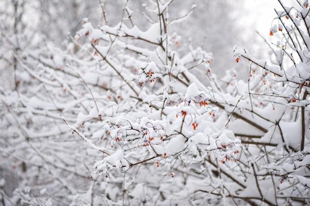 Äste im schneewinter Premium Fotos