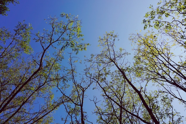 Äste mit grünen blättern und blauem himmel in der herbstsaison