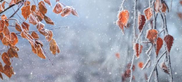Äste mit verwelkten herbstblättern auf unscharfem hintergrund während eines schneefalls. weihnachten und neujahr hintergrund