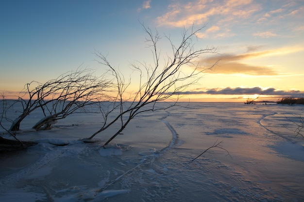 Äste ragen bei sonnenaufgang unter dem zugefrorenen see hervor