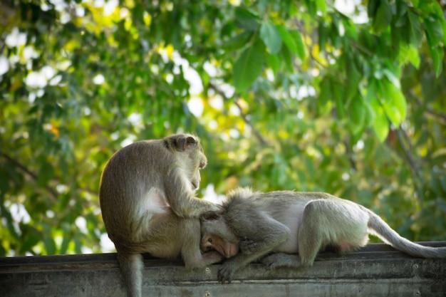 Affe allein in der mittelstadt fröhlichkeit