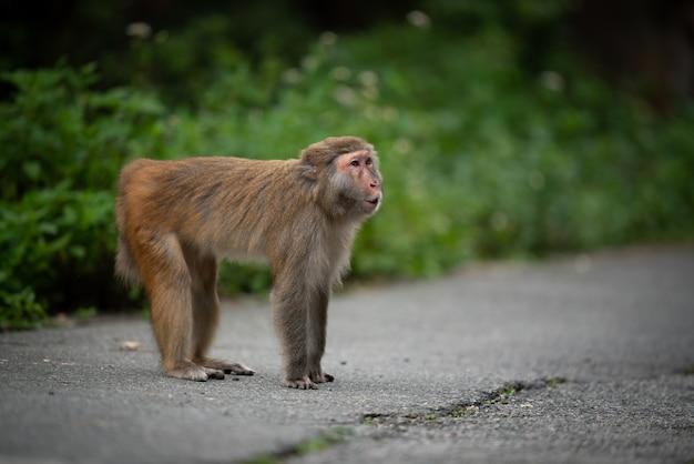 Affe an der straße