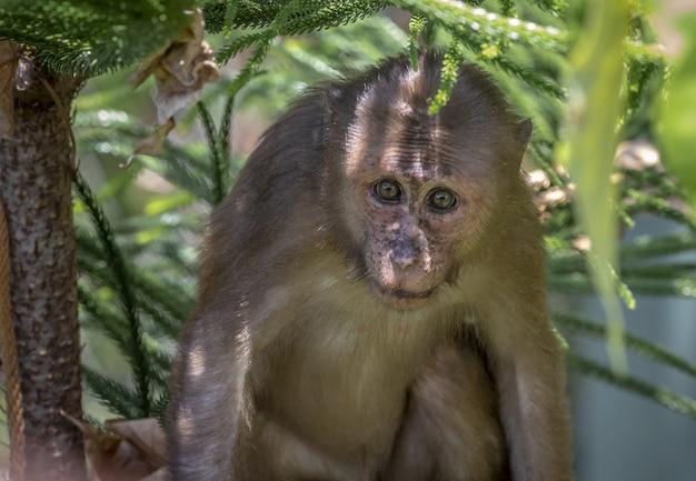 Affe auf baum in waldnahaufnahme