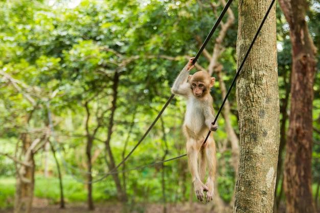 Affe auf draht im tropischen wald in hainan