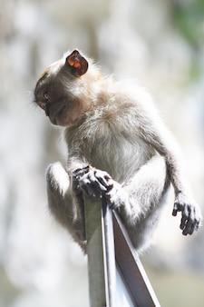 Affe auf einem türrahmen