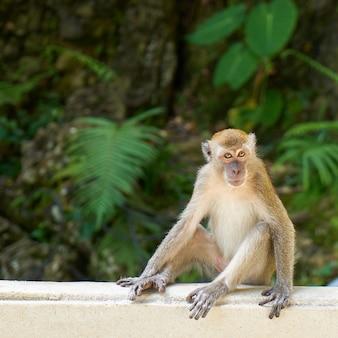 Affe auf einem weißen zaun sitzt