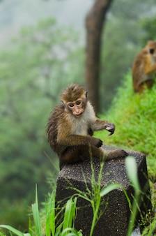 Affe, der auf dem stein sitzt und stillsteht