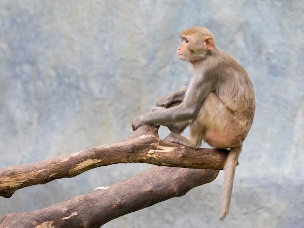 Affe, der auf einem baumast sitzt.