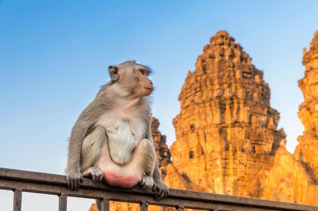 Affe, der auf zaun mit einer pagode im hintergrund, lopburi thailand sitzt