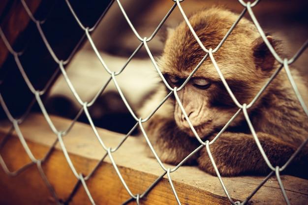Affe, der im käfig am zoo sitzt