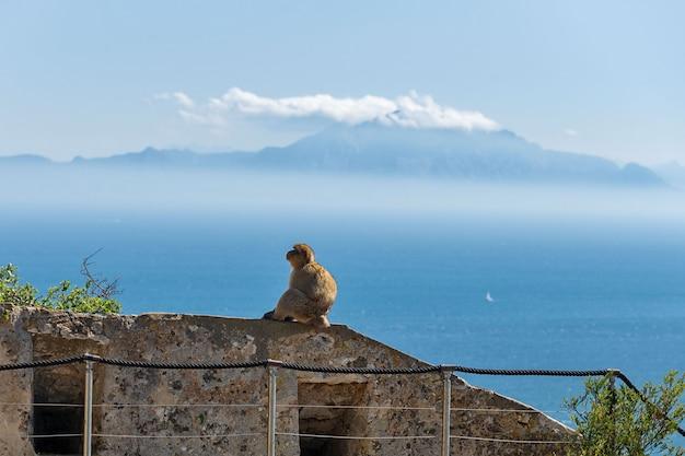 Affe, der mit seeschiff und berg in gibraltar sitzt