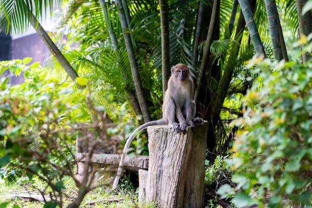 Affe setzt sich