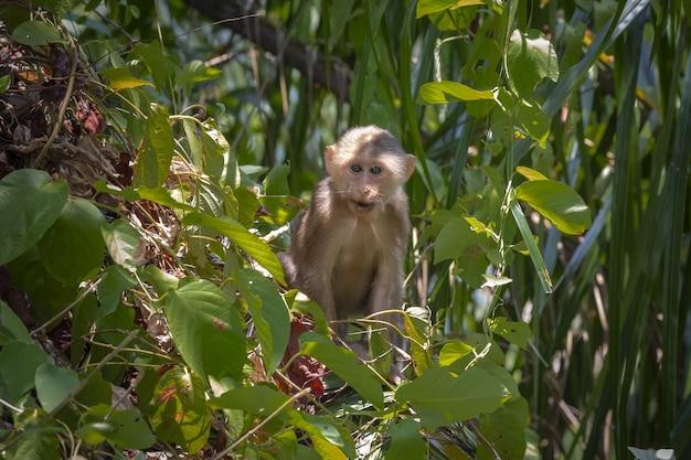 Affe sitzt auf ast