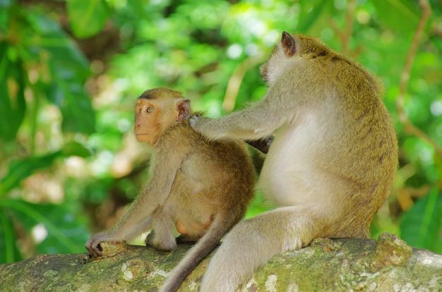 Affe sitzt auf dem baum