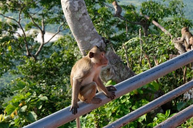 Affe sitzt auf geländer