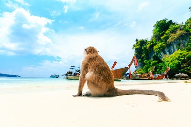 Affe-strand, phi phi islands, thailand