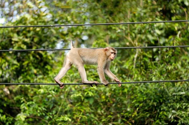 Affen, die im wald leben