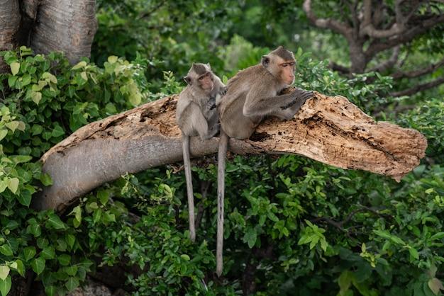 Affenfamilie, die zusammen in der natur heraushängt