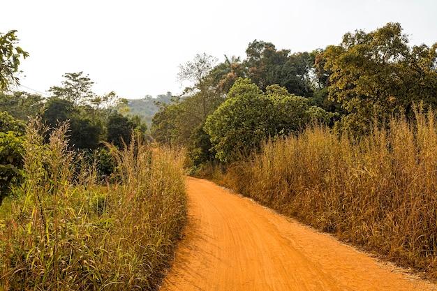 Afrikanische naturlandschaft mit bäumen und weg