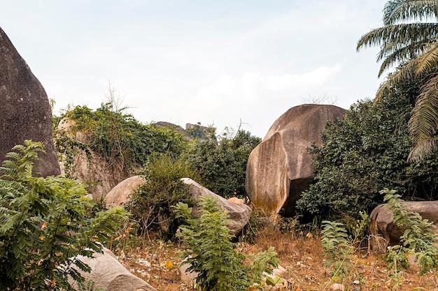 Afrikanische naturlandschaft mit bäumen