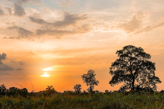 Afrikanische naturlandschaft mit sonnenuntergangshimmel und bäumen