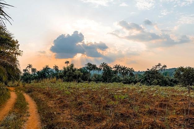 Afrikanische naturlandschaft mit straße und bäumen