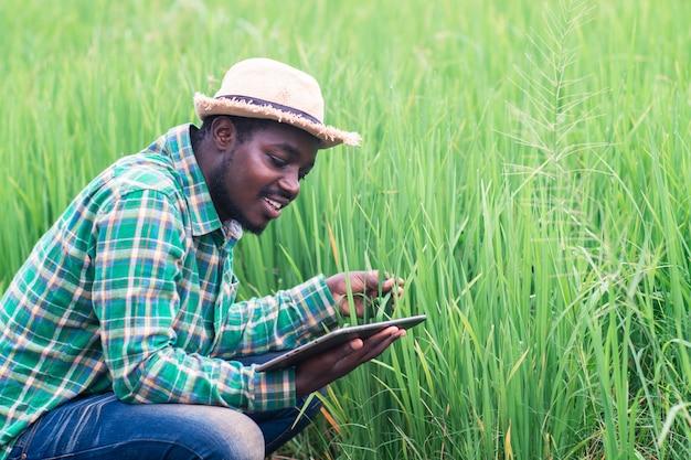 Afrikanischer bauer, der tablette für forschungsblätter von reis auf dem gebiet des bio-bauernhofs sucht.landwirtschafts- oder anbaukonzept