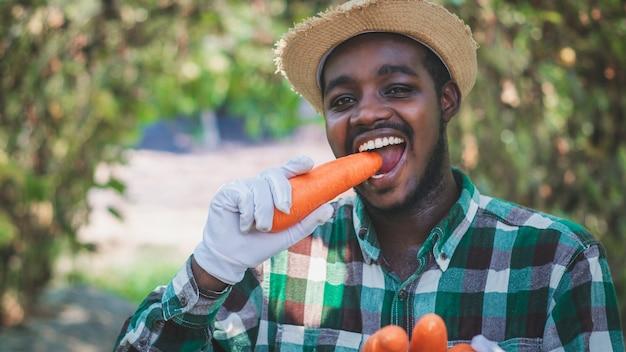 Afrikanischer bauer isst und beißt köstliche karotten in einem bio-bauernhof