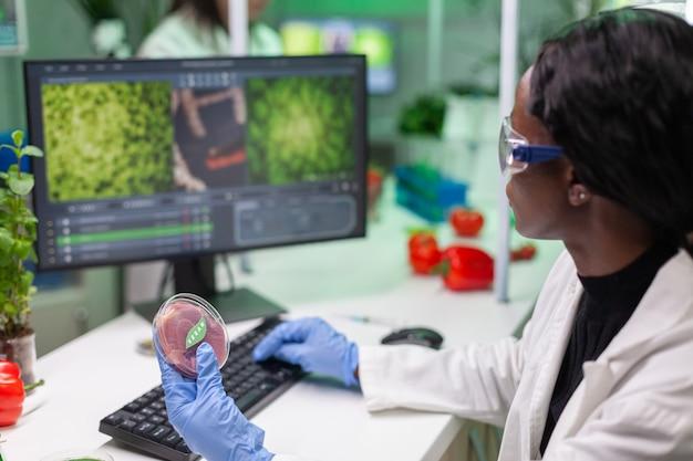 Afrikanischer chemiker, der petrischale mit veganem fleisch in händen hält holding