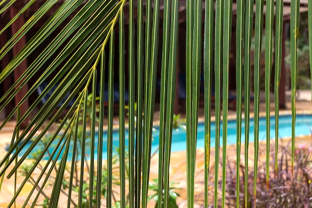 Afrikanischer kokospalme hintergrund natürlicher hintergrund