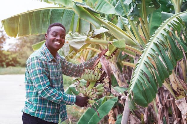 Afrikanischer landwirt, der grüne banane auf bauernhof hält