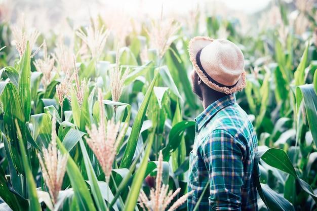 Afrikanischer landwirt mit hutstand auf dem maisplantagengebiet