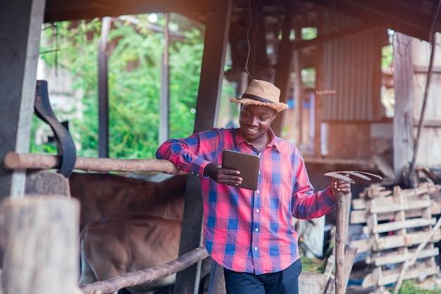 Afrikanischer landwirtmann, der tablette seinem arbeitsplatz nahe kühen im bauernhof betrachtet