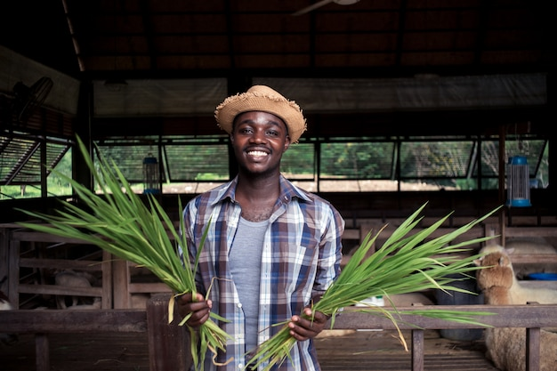 Afrikanischer landwirtmann des lächelns, der gras hält.
