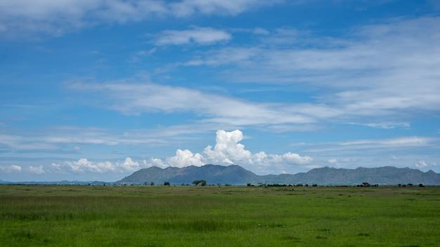 Afrikanisches panorama im serengeti-nationalpark