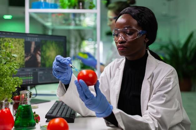 Afroamerikanischer biologeforscher mit medizinischen handschuhen, die bio-tomaten injizieren