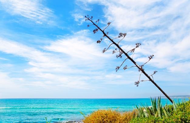 Agavenblume wie mediterrane landschaft