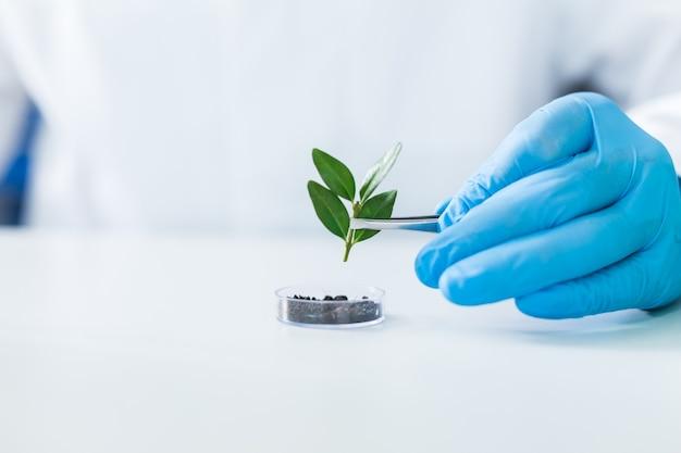 Agro engineering. selektiver fokus einer kleinen anlage, die für die agrotechnische forschung verwendet wird