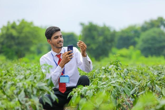 Agronom, der foto im smartphone am grünen chilipfefferfeld nimmt