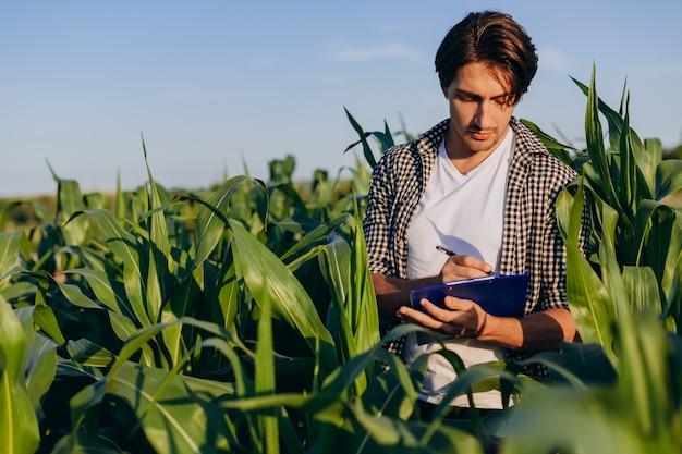Agronom des jungen mannes, der auf einem maisgebiet steht und kontrolle über den ertrag übernimmt