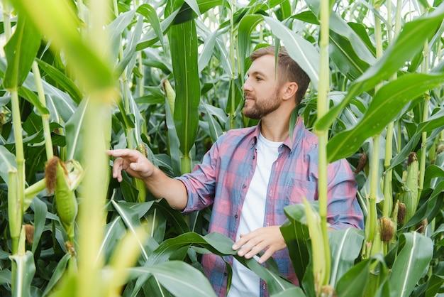 Agronom des jungen mannes, der in einem maisfeld steht und die kontrolle über den ertrag übernimmt.