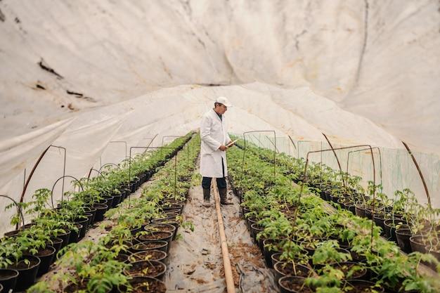 Agronom in der weißen uniform, die klemmbrett hält und auf tomate prüft, während im kindergarten steht.