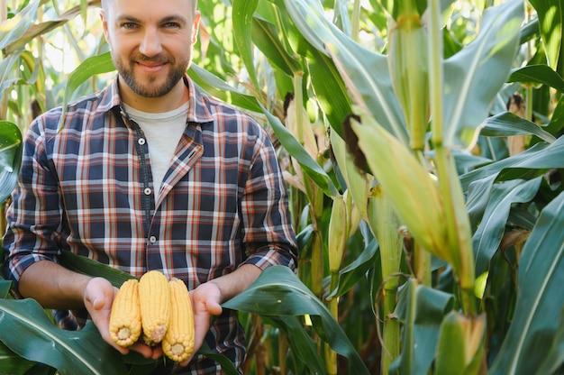 Agronom überprüft mais, wenn er zur ernte bereit ist. porträt des bauers