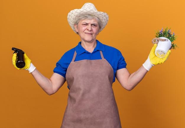 Ahnungsloser älterer weiblicher gärtner, der gartenhut und handschuhe trägt, die sprühflasche und blumentopf auf orange halten