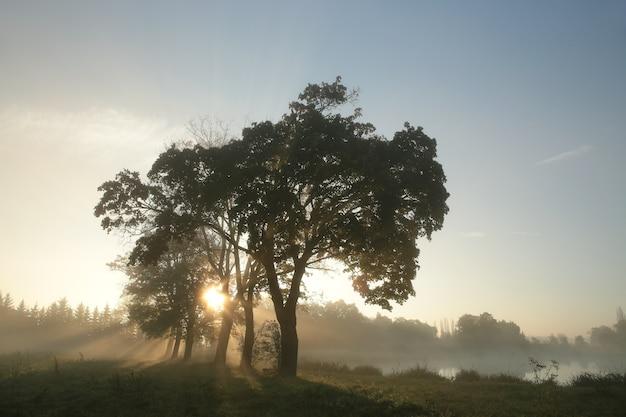 Ahornbäume beleuchtet von der aufgehenden sonne
