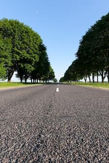 Ahornbäume wachsen entlang der asphaltierten straße mit breiten kronen und grünem laub, die straße im sommer
