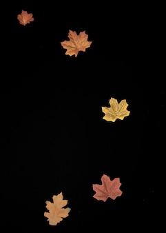 Ahornblätter angeordnet auf schwarzem hintergrund