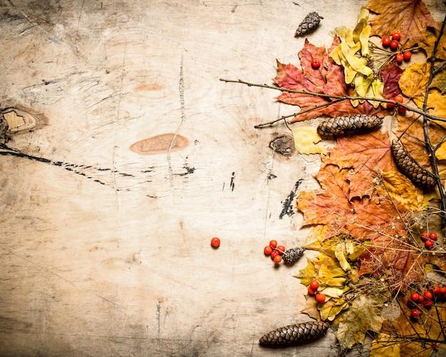Ahornblätter der herbstart mit tannenzapfen und eberesche auf hölzernem hintergrund
